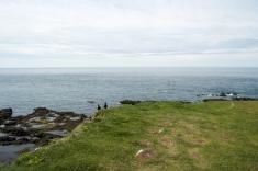Pulcinella di mare a Látrabjarg