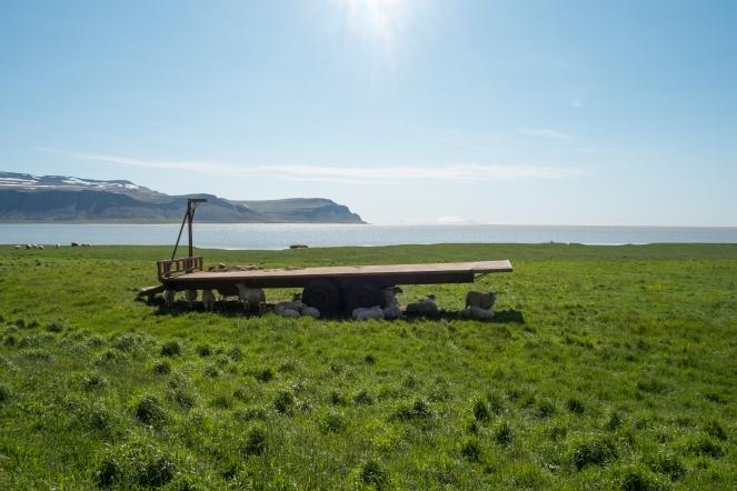 Pecore a Rauðasandur