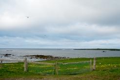 Lungo la costa di Strandir